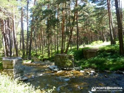Pesquerías Reales - Monte de Valsaín; la charca verde; gente viajera;gratis, free